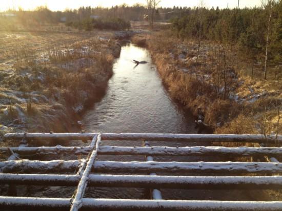 Koka tilta paliekas
